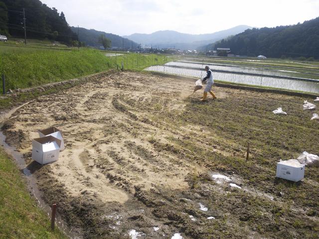 「スノム土壌」を全体に均一に散布します